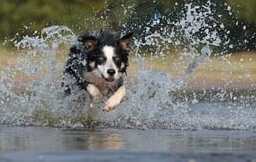 badhund - kraften i att inte göra något